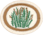 Grasses Honor Requirements
